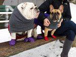 Pawz #frenchie #frenchbulldog #buhi http://www.frenchbulldogrescue.org