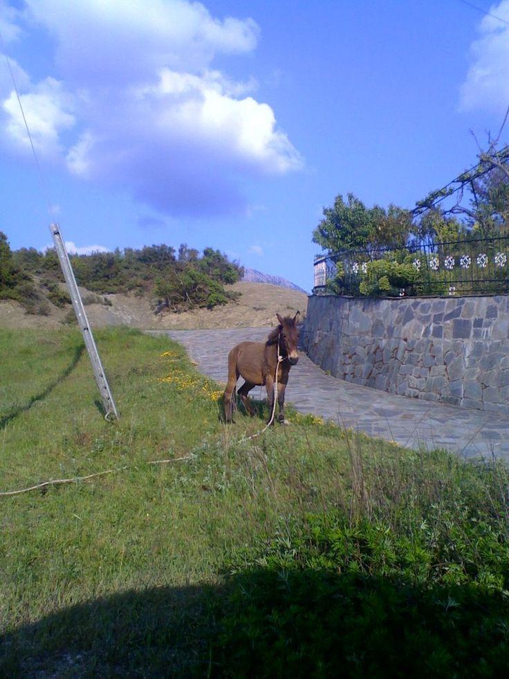 Γαϊδουράκι στην Ποταμιά Photo from Kato Potamia in Evritania | Greece.com