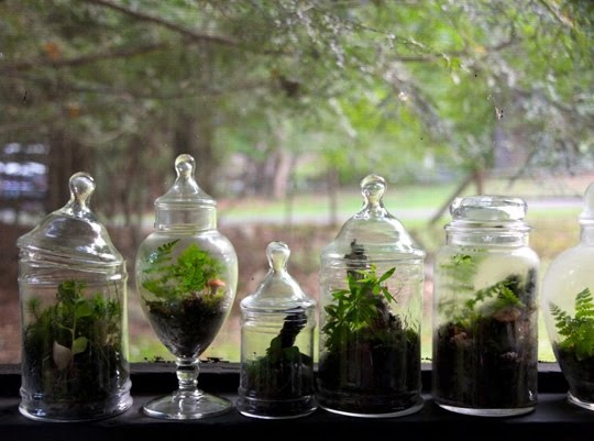 Apothecary Jars For A Windowsill Herb Garden