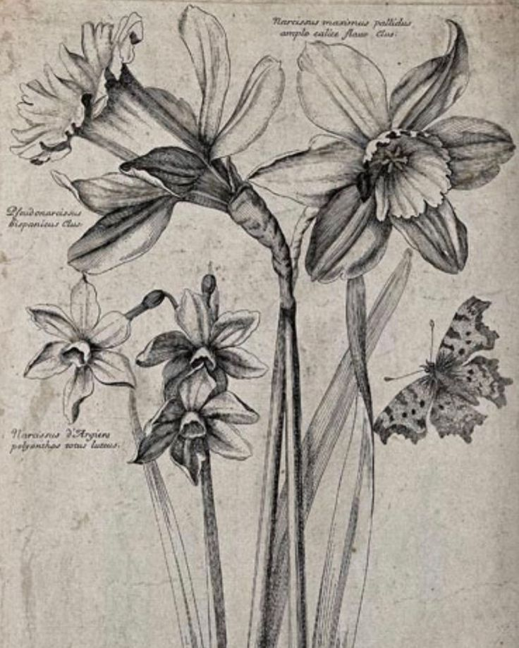 Pin by Divyaanshi on Art in 2020 Flower sketches