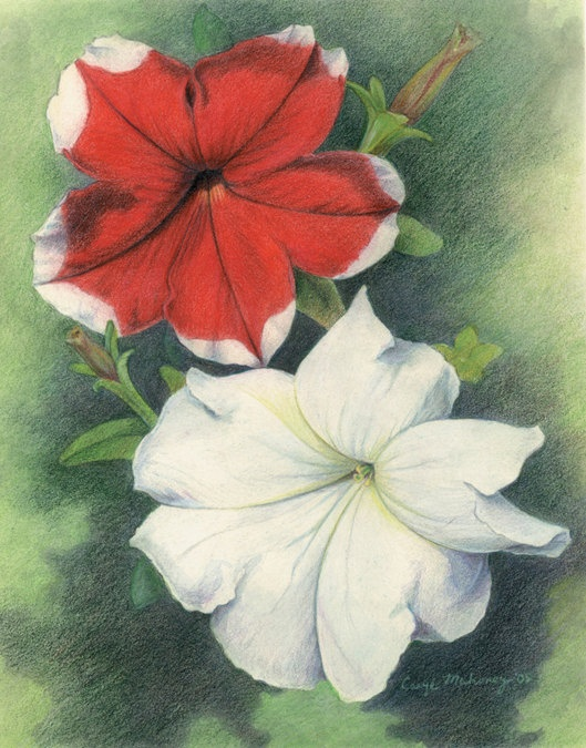 Red and white petunia flowers  Art Reproduction by CaryeVDPMahoney