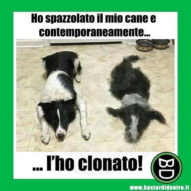 Clonare il tuo #cane : lo hai fatto benissimo! #bastardidentro #pelo www.bastardidentro.it