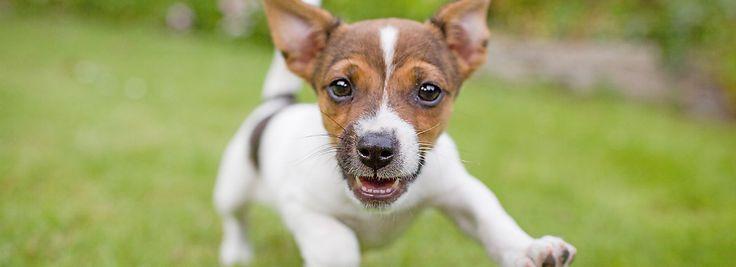 Puppy Training Tips   PetSmart