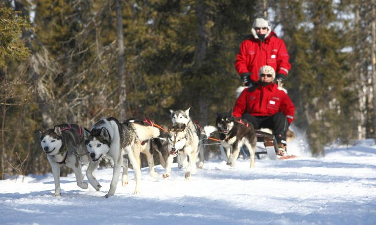 sleigh ride in lapland - Google Search