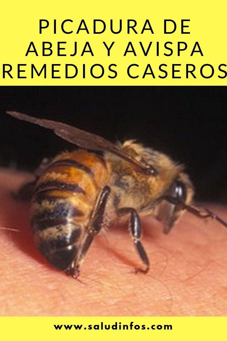Picadura De Abeja Y Avispa Remedios Caseros Picadura Abeja Avispa Insects