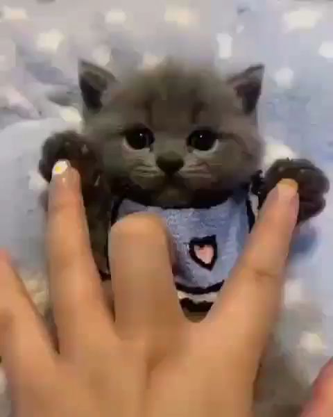 Amazing Little Cute Black Kitten
