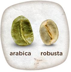 The vast majority of coffee beans come from two species of coffee: Coffea arabica, and Coffea robusta.   www.greencoffeepremium.com