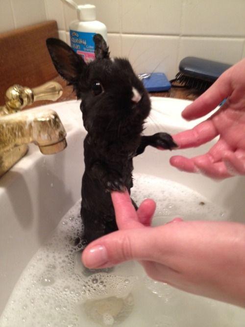 Funny bunny. Hehe. :)