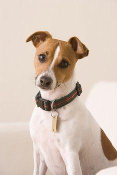 Pet News | Pet ID Tags: Your Pet's Wallet | Pets Best