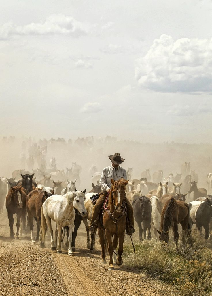 Cowboys and the Cattle Industry