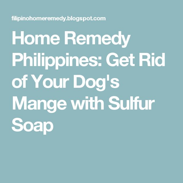 Home Remedy Philippines: Get Rid of Your Dog's Mange with Sulfur Soap