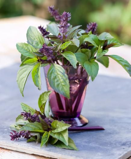 Cinnamon basil: Like its namesake, cinnamon basil has a distinct spicy note. Cinnamon basil pairs well with fresh fruit. It can add a cinnamon-y note to fruit smoothies or be a fragrant garnish for summery desserts.