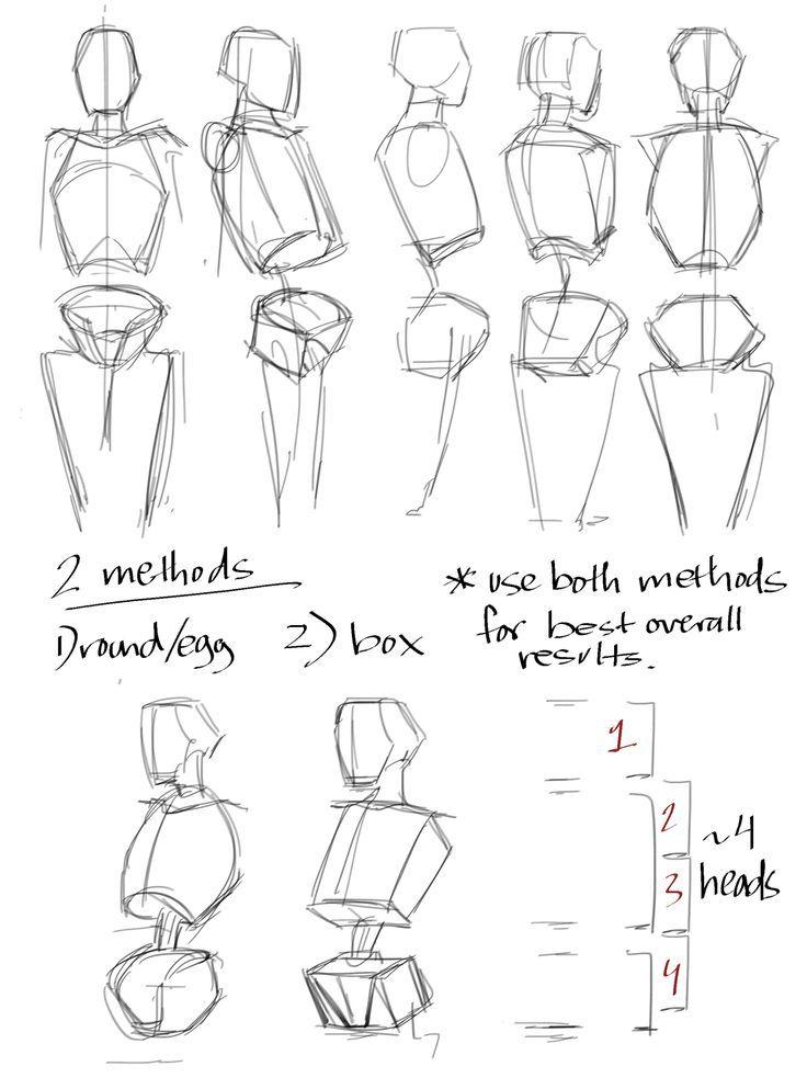 25++ Anatomy tutorial ideas