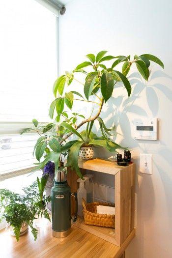 窓の脇にはツピタンサス、コウモリランなどを飾る。グリーンが安らぎを与えてくれる。