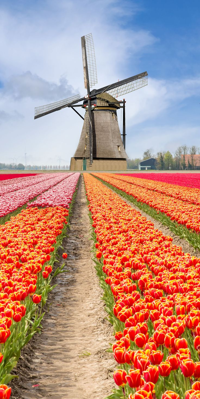 #Windmill - Keukenhof Gardens, #Netherlands http://dennisharper.lnf.com/ ▪️▫️▪️▫️▪️