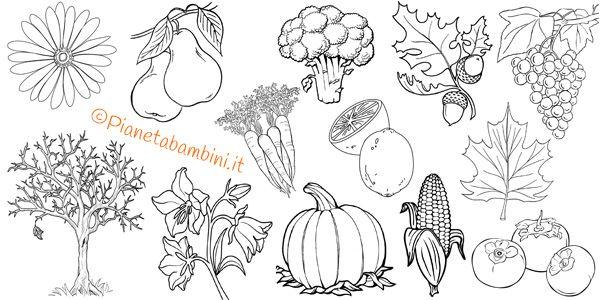 142 Disegni Di Vegetali Da Colorare Disegni Disegno Di Elefante Disegni Da Colorare