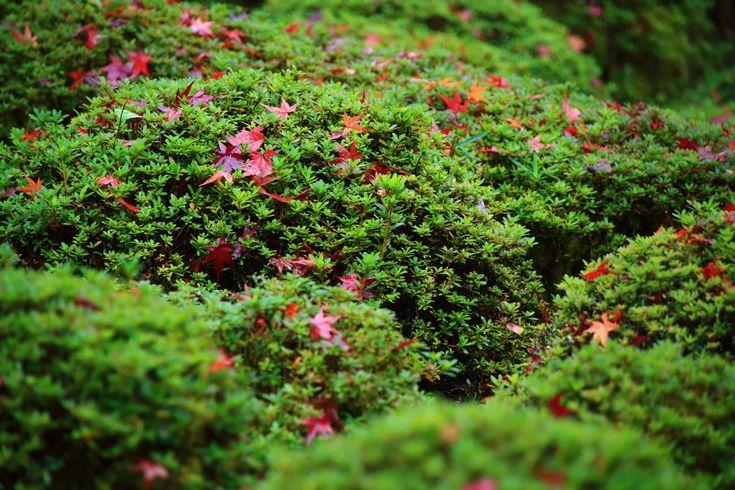 金福寺 写真 紅葉 高画質 京都 洛北