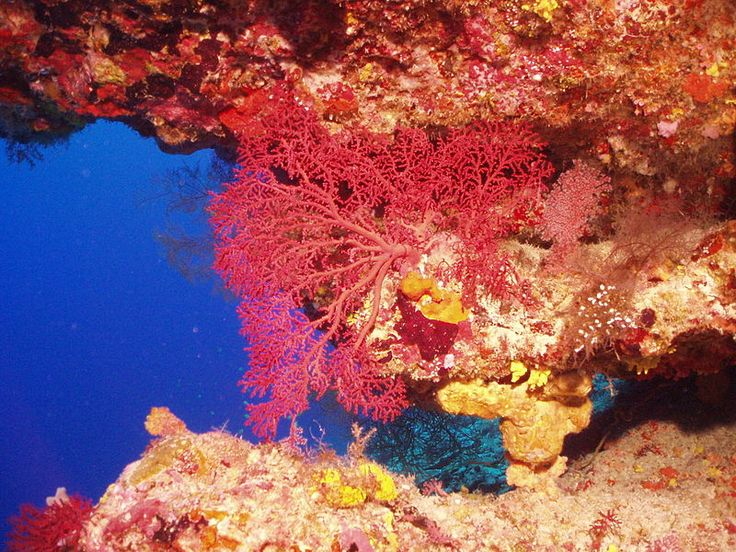 The Chagos Archipelago is a hotspot of biodiversity in the Indian Ocean