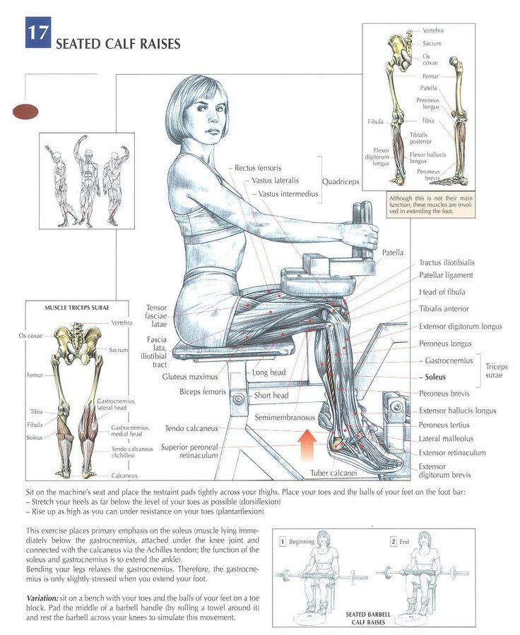 Seated Calf Raises | Train Tough | Pinterest