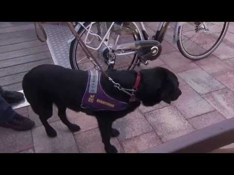 [video] Nelis vertelt wat zijn zijn PTSS buddyhond Noury voor hem betekent.