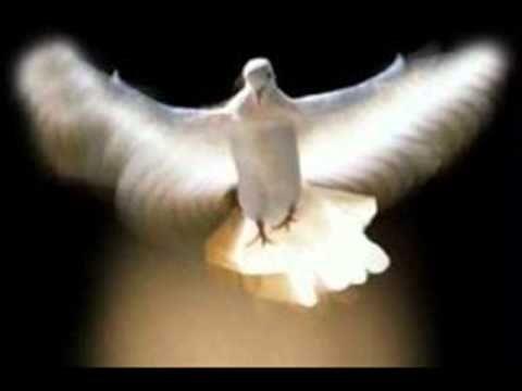 Kleine witte duif