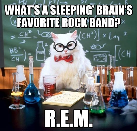 Sleeping brain… Psychology humor. I probably shouldn't have laughed as hard as I did but oh well