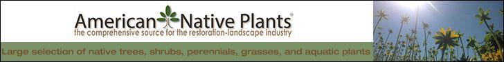 Plant Fall Vegetable Garden | Late Summer Gardening: Gardening