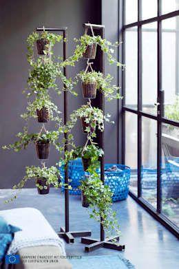 25+ Best Ideas About Sichtschutz Efeu On Pinterest | Efeu Pflanzen ... Vertikale Begrunung Balkon Sichtschutz
