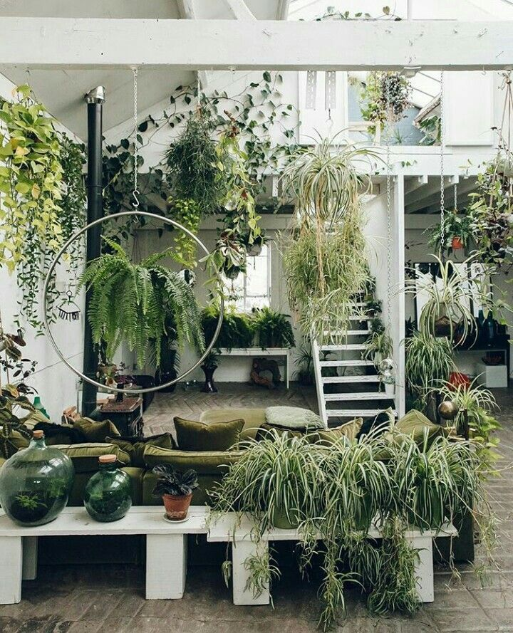 Pin By The Bohemian Shop On House Plant Inspiration House Plants