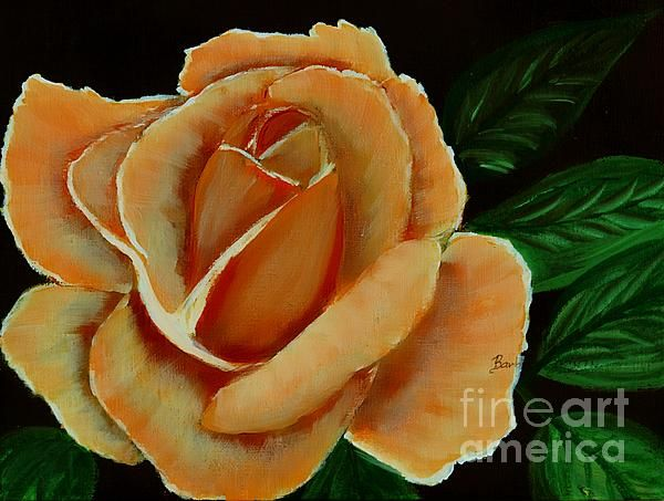 airbrushed coral rose
