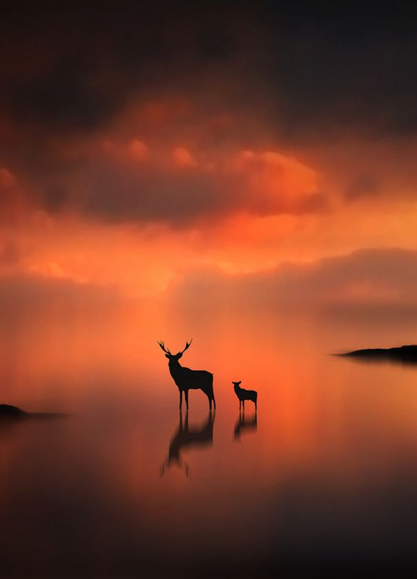 The Deer at Sunset (by Jenny Woodward).
