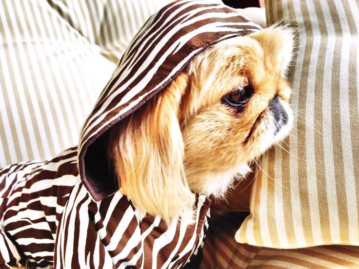 ZEBRA DESIGN COAT - DOUBLE SIDED Zebra Desenli Palto - Çift Taraflı kemique petshop köpek malzemeleri kopek kıyafetlerı köpek kıyafetleri kopek elbıselerı köpek elbiseleri kopek elbise köpek elbise dog clothes köpek modası kopek modası dog fashıon köpek için kıyafet kopek ıcın elbise köpek için elbise köpek paltosu köpek montu köpek ceketi köpek tişörtü http://kemique.com/page.php?id=8