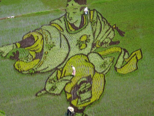 Rice Paddy Art: Inakadate (Aomori prefecture) is the home of Japan's finest rice crop art, which is created naturally by planting different coloured #rice plants. Note the size of the three farmers. Source: http://pinktentacle.com/2010/07/photos-rice-paddy-art-2010/ #LivingArt