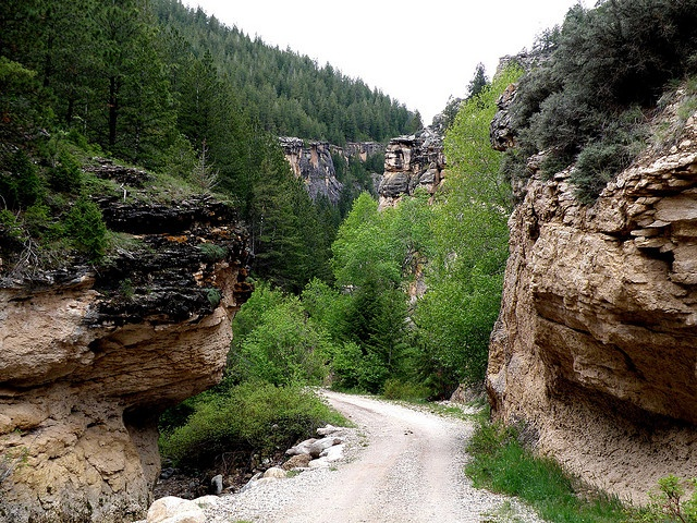 Crazy Woman Canyon - is near Buffalo, WY in the Big Horn Mountains