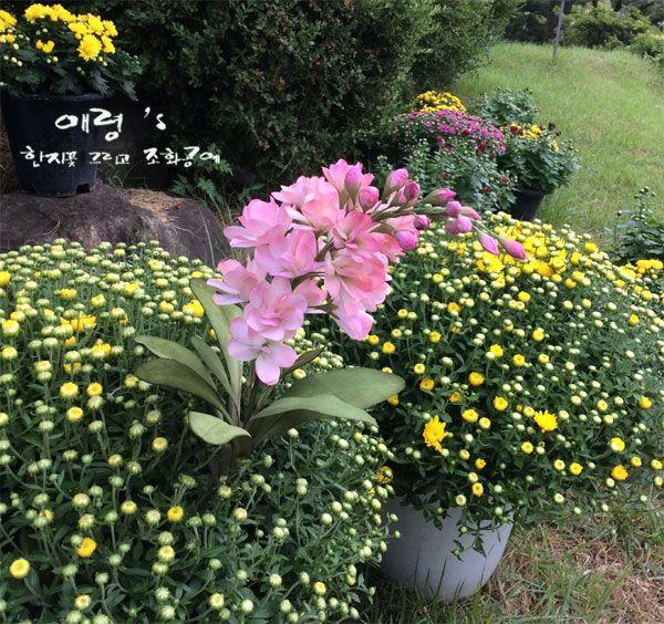 조화공예(아트플라워) 스토크 stoke of artflowers crafted http://blog.naver.com/koreapaperart  #조화공예 #종이꽃 #페이퍼플라워 #한지꽃 #아트플라워 #조화 #조화인테리어 #인테리어조화 #인테리어소품 #주문제작 #수강문의 #광고소품 #촬영소품 #디스플레이 #artflower #koreanpaperart #hanjiflower #paperflowers #craft #paperart #handmade #스토크 #stoke