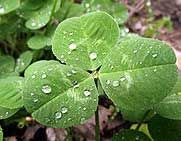 Education World: St. Patrick's Day Lesson: The Real Story of St. Patrick