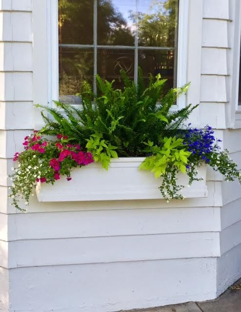 create overflowing window boxes and planters inexpensively: with divided mature plants setting side by side in planter (gives a quick overflowing planter box to start off summer)