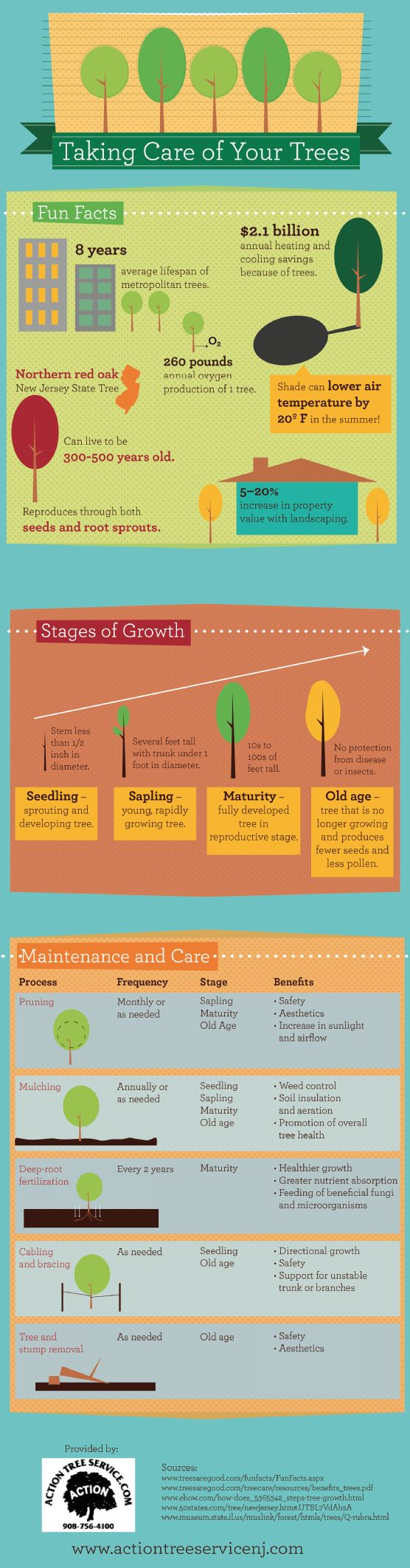 Pruning the trees in your yard results in more than just a tidy appearance—it also helps remove branches that could snap during or after a storm and damage your home. This infographic from a New Jersey tree removal service has more information. Source: http://www.actiontreeservicenj.com/663586/2013/03/14/taking-care-of-your-trees-infographic.html