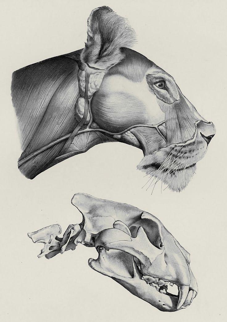 Mejores 173 imágenes de animals to draw en Pinterest | Animales ...