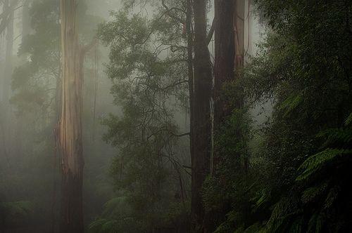 Dandenongs  Melbourne  Victoria  Australia  (by Ranga 1)