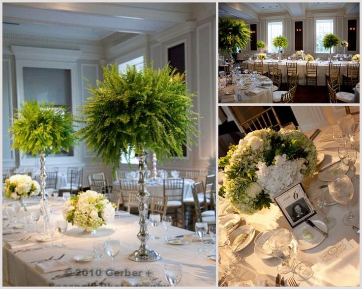 Reception - Ferns as inexpensive centerpieces - every other table (high)