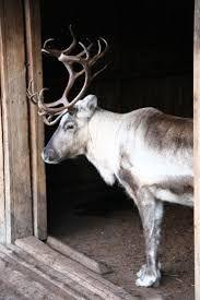 Image result for victorian reindeer