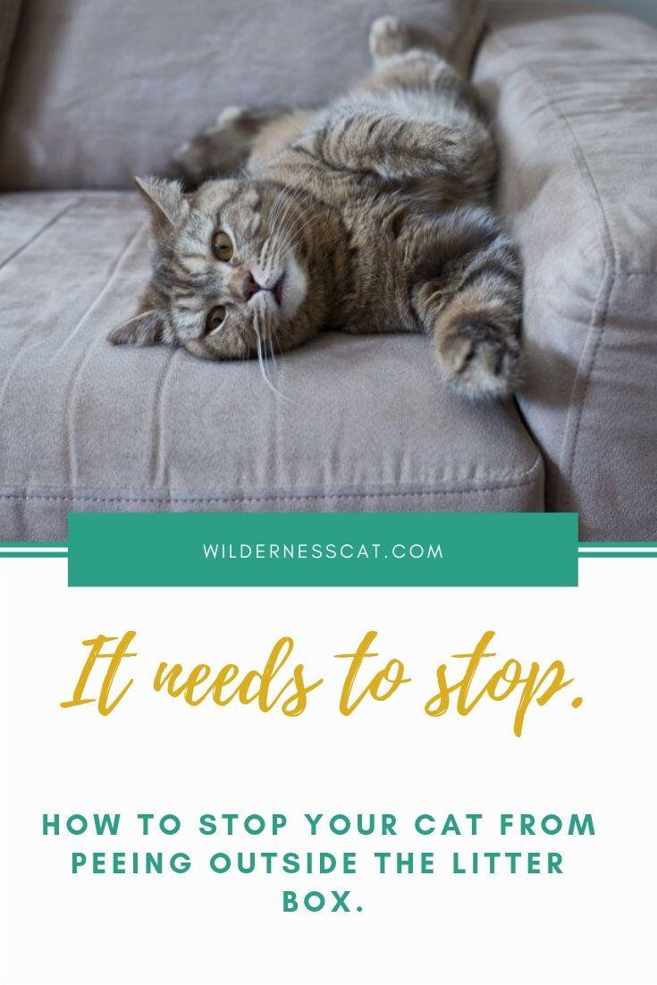 Cat Micturition Not Voguish Refuse Box