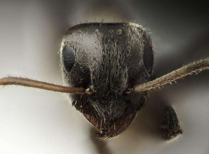 Anti-fourmis 100% naturel