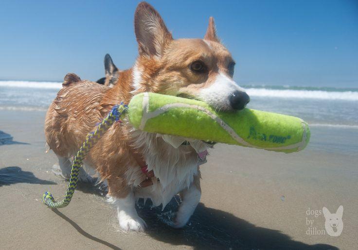 Dog Friendly Beaches Socal