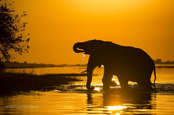 Red Delta Elephant Silhouette