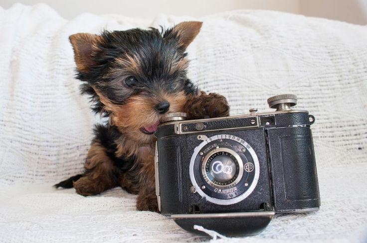 Little photographer - Little photographer