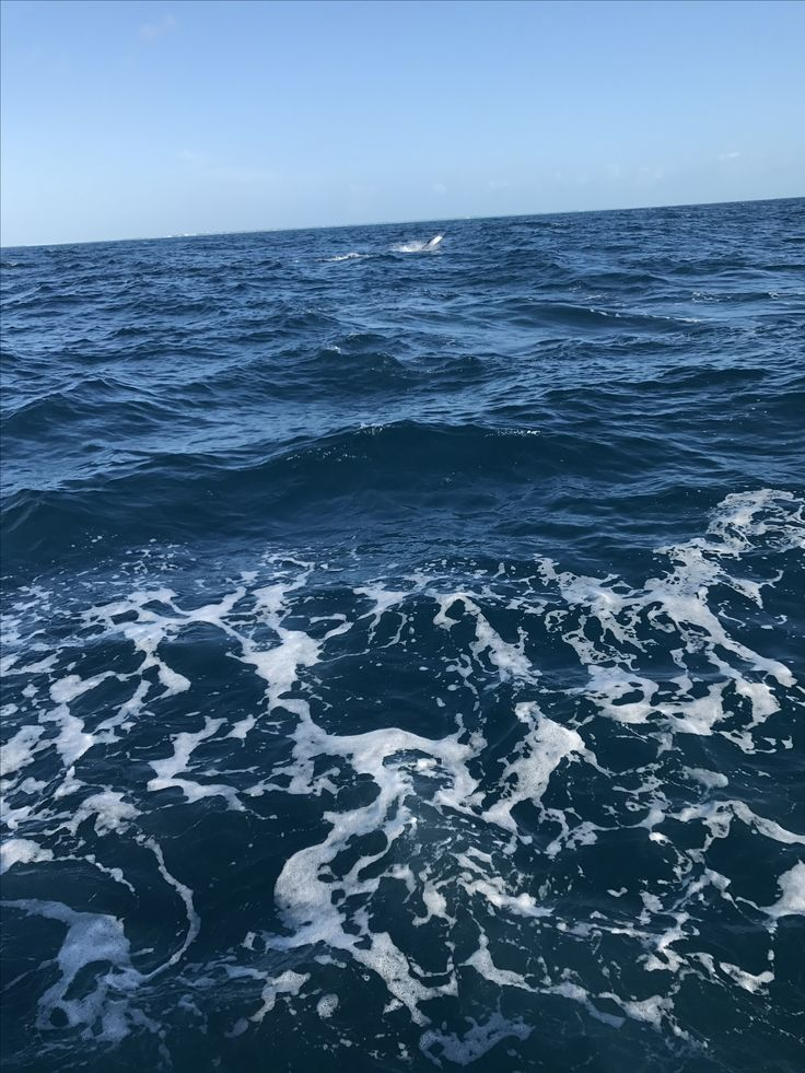 Fearless Fishing Report for Jan. 3 (#Islamorada, FL): Today we fished a half day. We caught some live #Ballyhoo to start and then had some great #Sailfishing right off the bat. We caught 1 out of 2 and a #Kingfish. Wind was southeast at 12 knots. Seas 2 to 3 feet #fearless #fishing #charter #conch27 #captjoehendrix