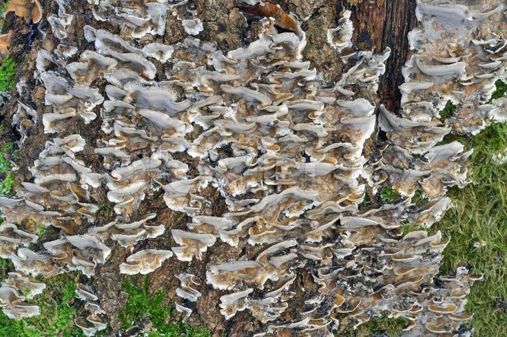 1453235-the-big-colony-of-wood-inedible-mushrooms-on-a-trunk-of-the-decayed-tree.jpg (800×533)