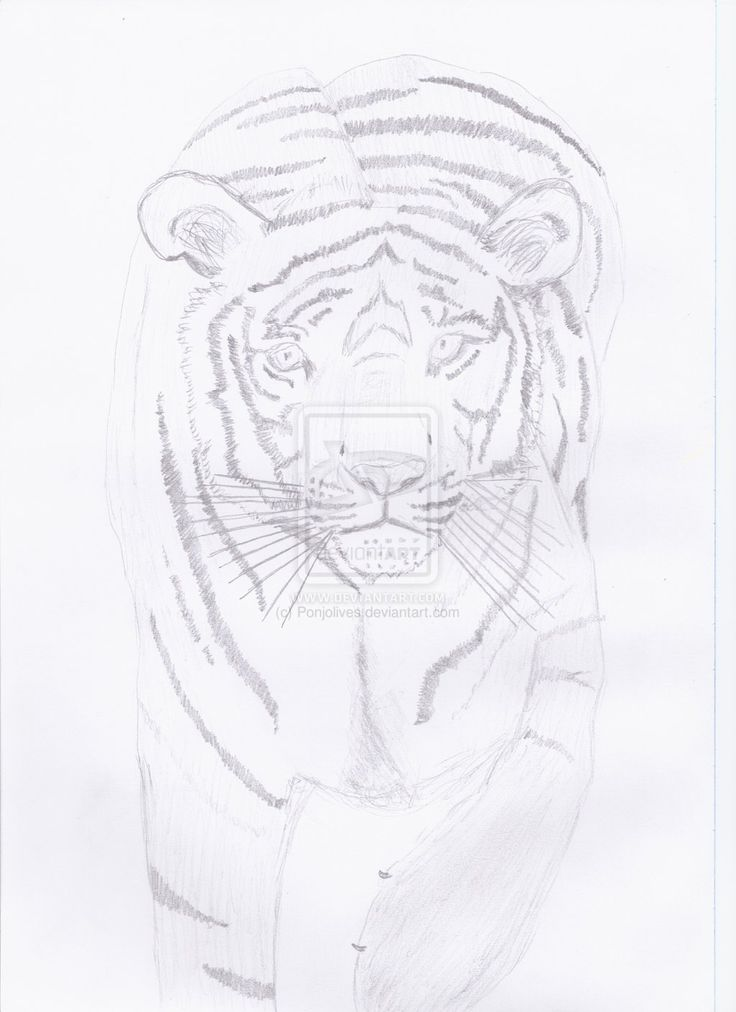 Tiger by Ponjolives.deviantart.com on @DeviantArt
